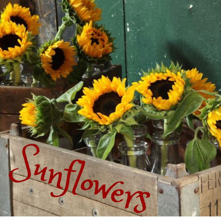 This Is A Neat Idea. Using An Old Crate For A Planter. These Sunflowers