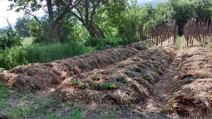 Najszybszym sposobem na uzyskanie grubej warstwy żyznej gleby na nieurodzajnym podłożu jest wykonanie grządek podwyższonych