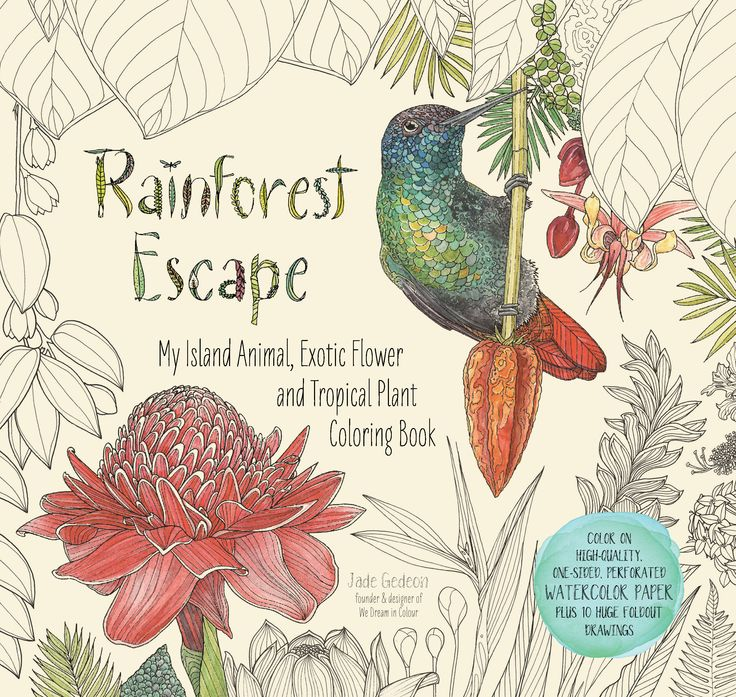 Rainforest Escape adult coloring book. Printed on high quality thick watercolor paper that highlights the varied effects of colored pencils, markers and paints. Each design has a blank back and perforated edge so readers can tear out their finished artwork for display. Premium lay flat binding. Want more? See the companion title: Island Escape.