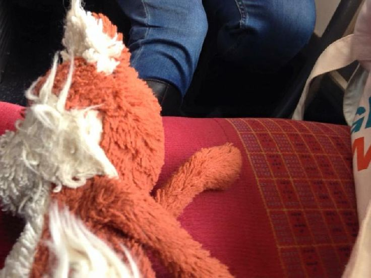 Lost on 05 Mar. 2016 @ Between Heathrow and Bangor, Northern Ireland. My son lost his Mr Fox somewhere between Heathrow Terminal 5 and Bangor, N, Ireland. We went on a BA flight, Belfast city airport and Holywood Sainsbury's. He's a Jellycat fox. Previously fluffy bu... Visit: https://whiteboomerang.com/lostteddy/msg/nkq07y (Posted by Abby on 31 Mar. 2016)