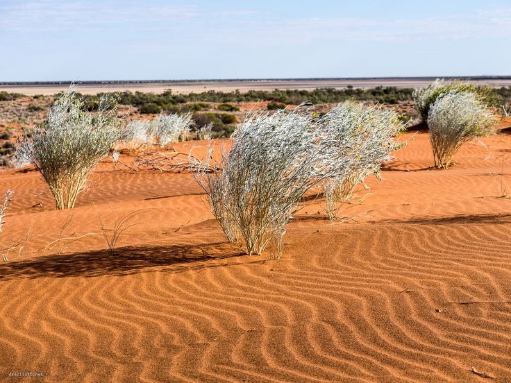 L'outback australien, ici dans le Queensland, se transforme souvent en fournaise...