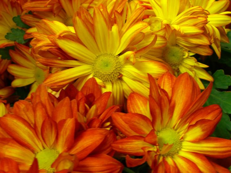 1228 Best FLOWERS Images On Pinterest