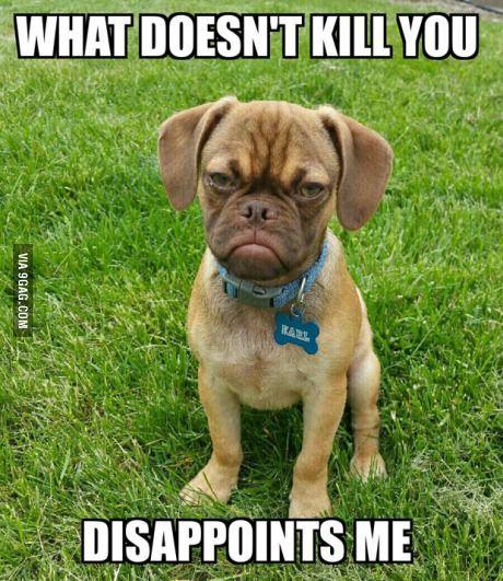 Grumpy Dog Earl