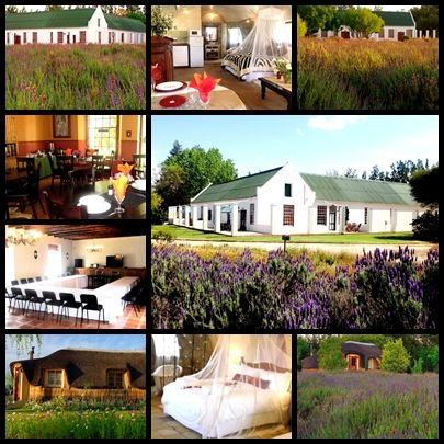 In the heart of the picturesque Worcester Breede River Valley, surrounded by majestic mountains, is the luxurious Reed's Country Lodge self-catering accommodation.  Honeymoon huts, family units, conference venues…we have it all!  Book your dream accommodation today!
