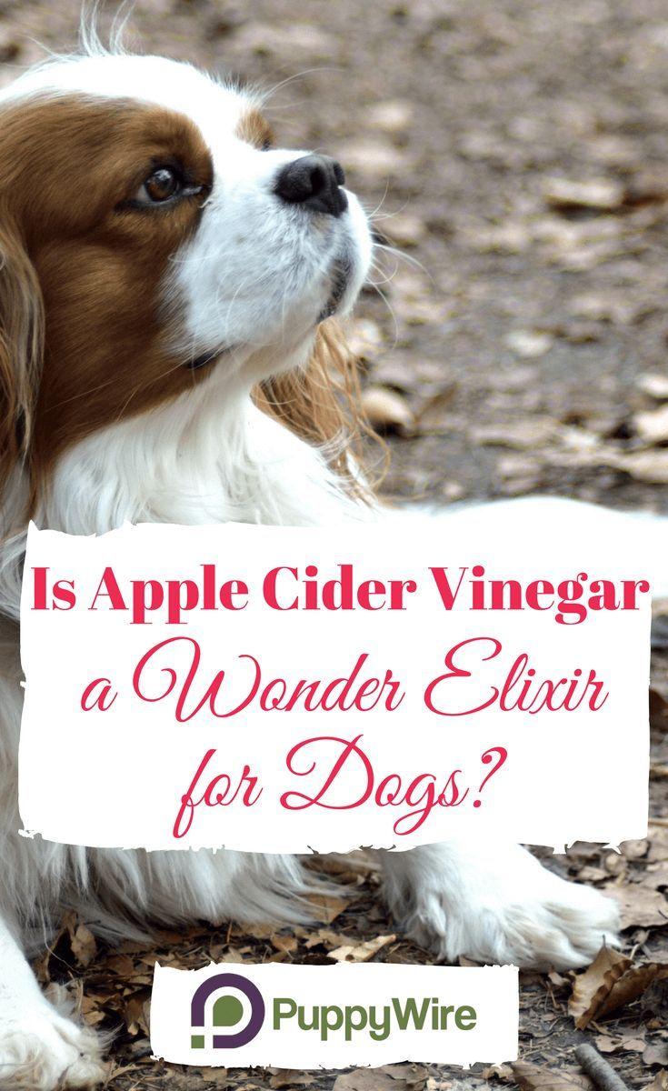 Apple Cider Vinegar For Dogs A Wonder Elixir For Your Dog Dog