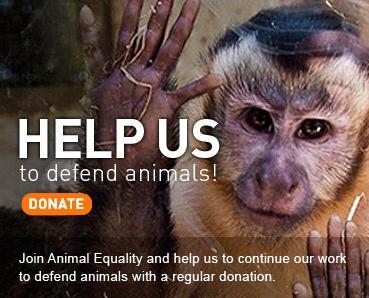 HELP ANIMALS: http://animalequality.net/
