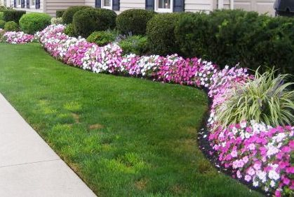 Best Shrubs and Bushes for Landscaping Pictures Design Ideas