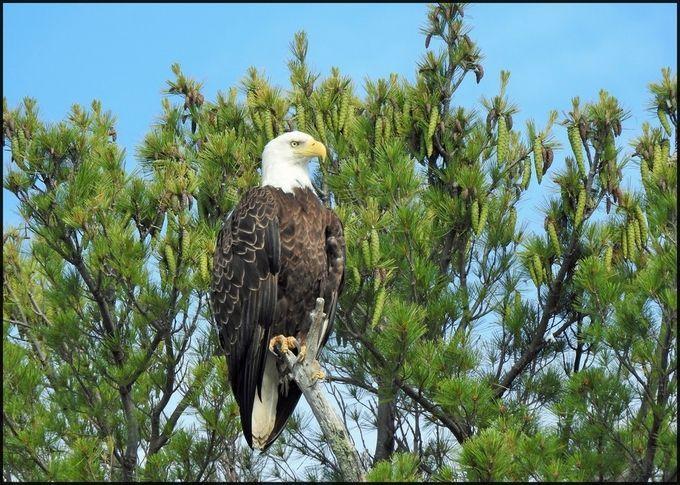 watchful eye by Sherrilynn - ViewBug.com