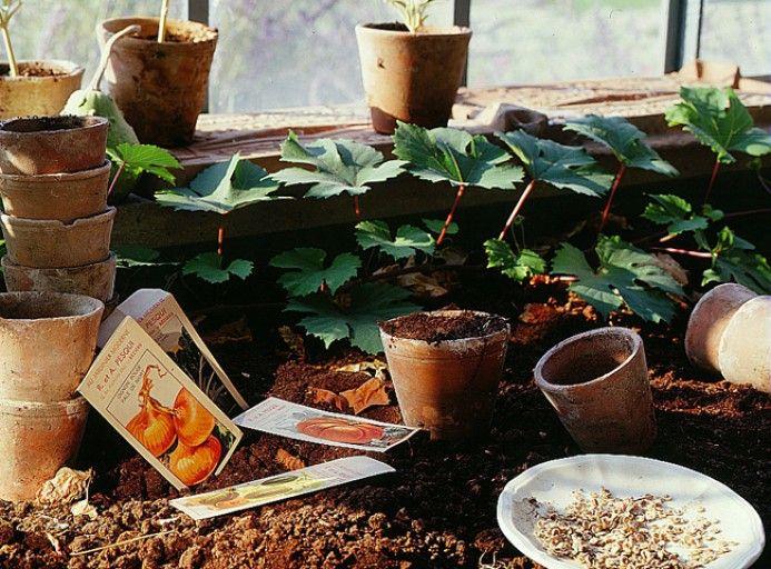 Jardiner malin - Profiter du chauffage de la maison pour ses semis - Rustica
