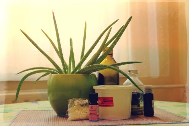 Fotonávod na prípravu mastičky z Aloe Vera alebo O lekárni v kvetináči