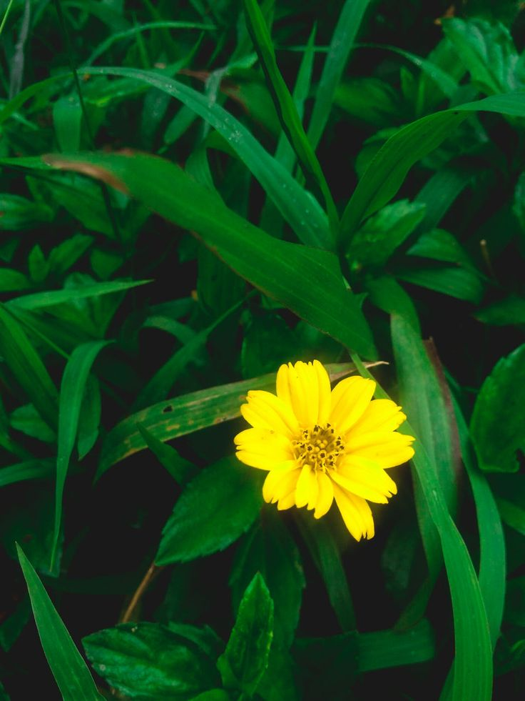 flower, yellow, petal, beauty in nature, nature, plant, fragility, growth, freshness, flower head, green color, leaf, outdoors, blooming, close-up, no people, day