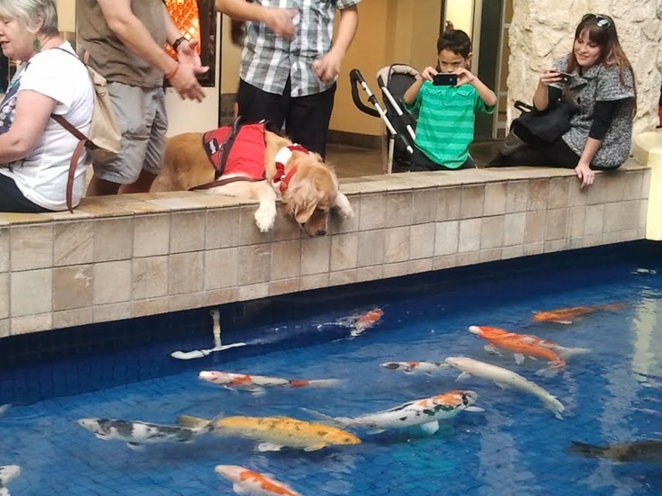 Service dogs gotta chill out too.  Ala Moana Mall.  December 2012 - Christmas