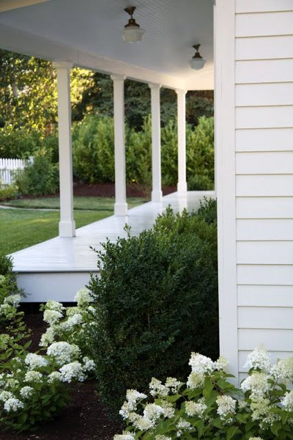 A Country Farmhouse: there is nothing prettier than white hydrangea planted with boxwood.