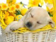 Springtime Hare - Wallpaper HD - HD Wallpaper | Free HD Wallpapers For Your Desktop #3025