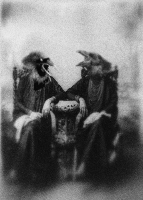 .Routah and Marnee, the gossiping black  black crows,