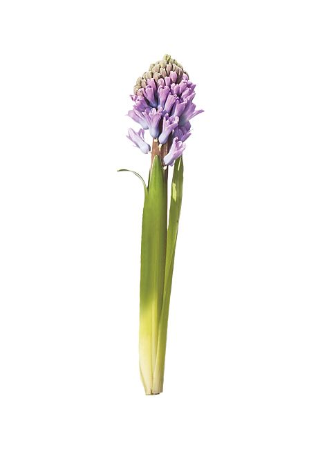 Brides.com: . Hyacinth. This flower is hyper perfumey, so don't use it on your reception dinner tables. It also comes in pink, green, white, blue, peach, and soft yellow.  Browse more hyacinth wedding flower ideas.