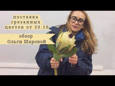 (14) Обзор поставки срезанных цветов от 20 октября с Ольгой Шаровой. - YouTube