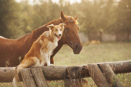 Der beste Schutz für Ihre Lieblinge, denn als Besitzer haften Sie für alle Schäden, die Ihr Tier anrichtet - für Personen-, Sach- und Vermögensschäden. Mit einer Tierhalterhaftpflicht sichern Sie sich ab.