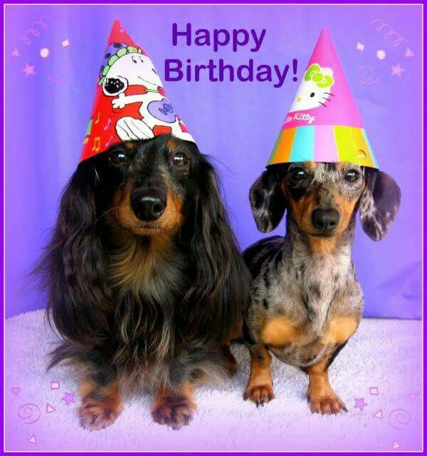 525 Best Images About Dachshunds Birthday Greetings Celebrations On Pinterest Birthday
