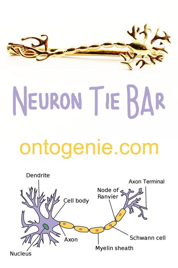 Neuron Tie Bar Neurons Lesson Quotes Life Lesson Quotes