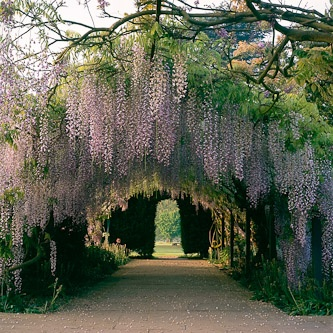 Wisteria Walk, Hampton Court, Herefordshire