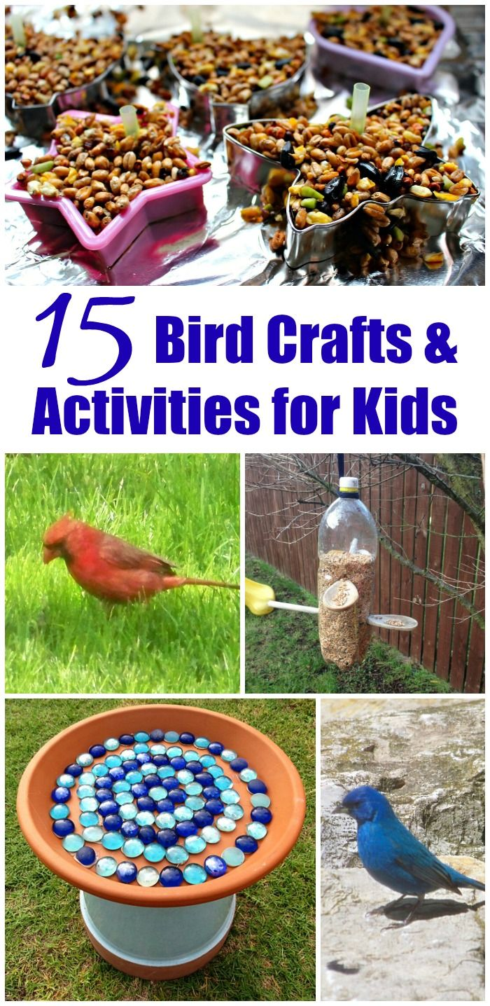 15 Outdoor Activities: Birds crafts & nature activities for kids | backyard habitats