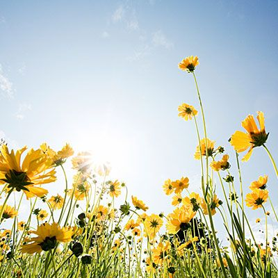 Plant now: Wildflowers for spring blooms