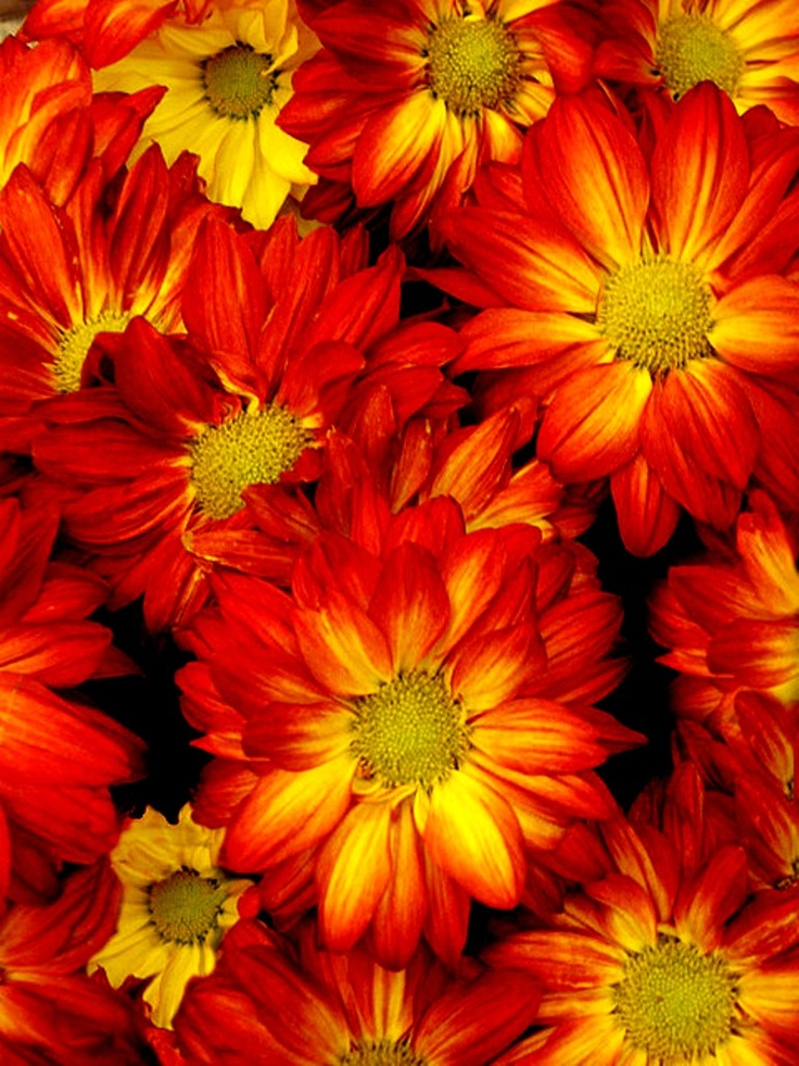 Related keywords suggestions for most beautiful fall flowers for Popular fall flowers