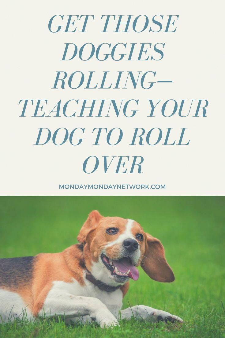 Teaching Your Dog To Roll Over Teachyourdog Dog Clicker