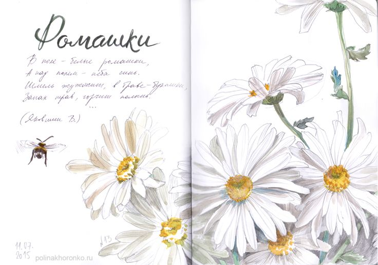 #sketchbook by Polina Khoronko: Скетчбук 2015 #watercolor #chamomile