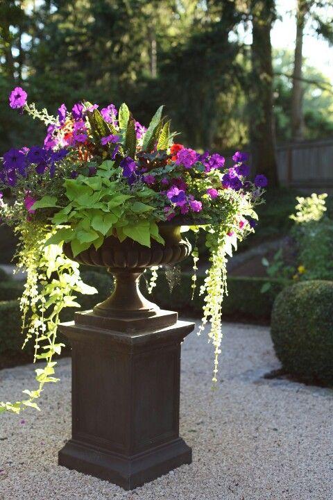 Beautiful container garden idea!