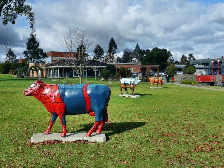 Cow sculptures in a park at Shepparton, Victoria