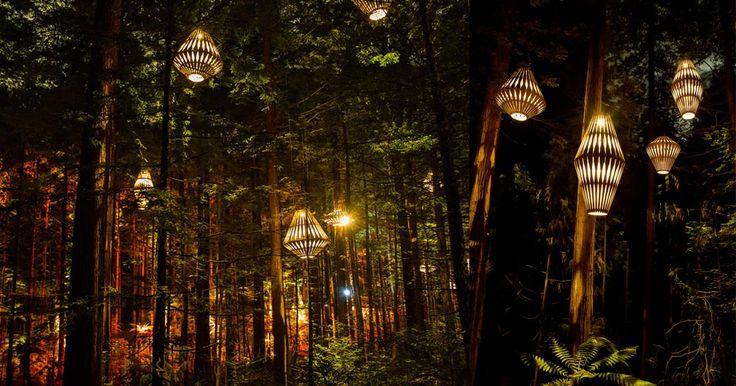 Il cammino fra le sequoie di Rotorua ha recentemente acquisito un fascino aggiuntivo rispetto alla sola meraviglia naturale, arricchendosi delle sculture di luce di David Trubridge, artista neozelandese specializzato in installazioni luminose. Le lanterne in legno, alte più di due metri e mezzo, son