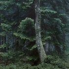 Michael Lange, Wald