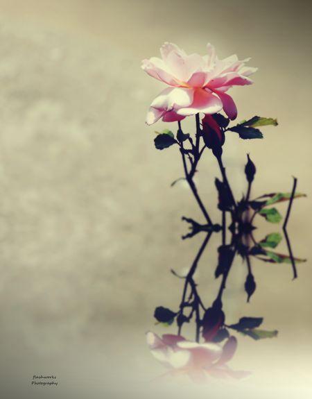 Pink mirror Photo by Eva María Miranda — National Geographic Your Shot