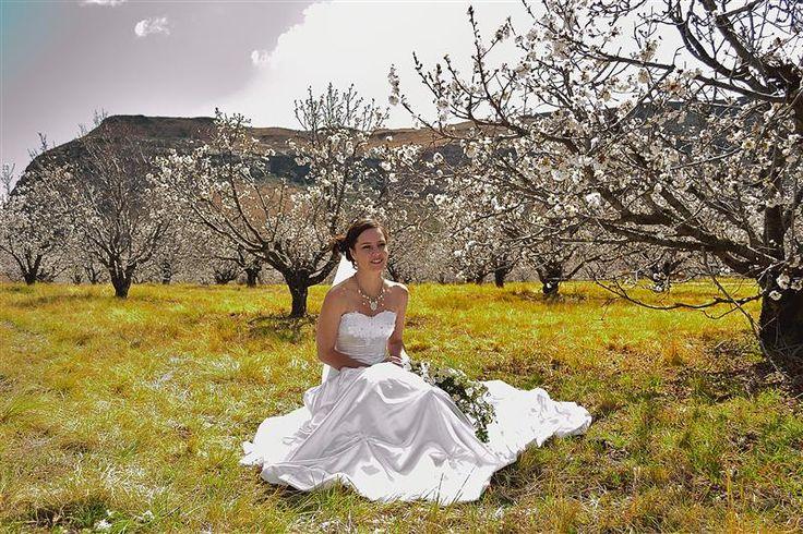 Cherry Lane - Welgelegen Wedding Venue - Fouriesbburg Eastern Free State, South Africa