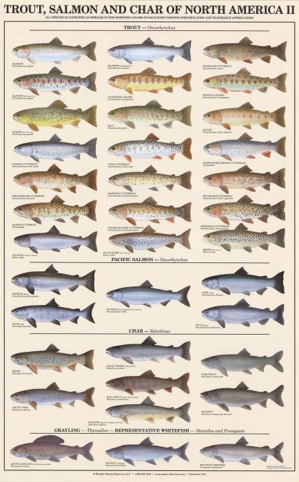 Best Salmon Fishing Ideas On Pinterest Fishing Tips Trout - Salmon fishing map us