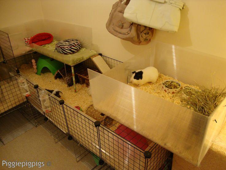 47 best guinea pig habitat images on pinterest pig stuff for Simple guinea pig cage