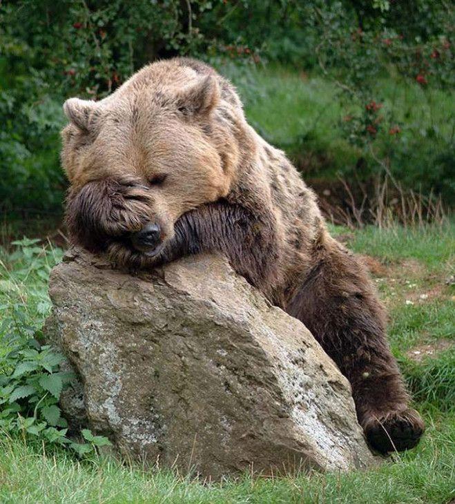 Des animaux qui ont une gueule de bois bien pire que la notre
