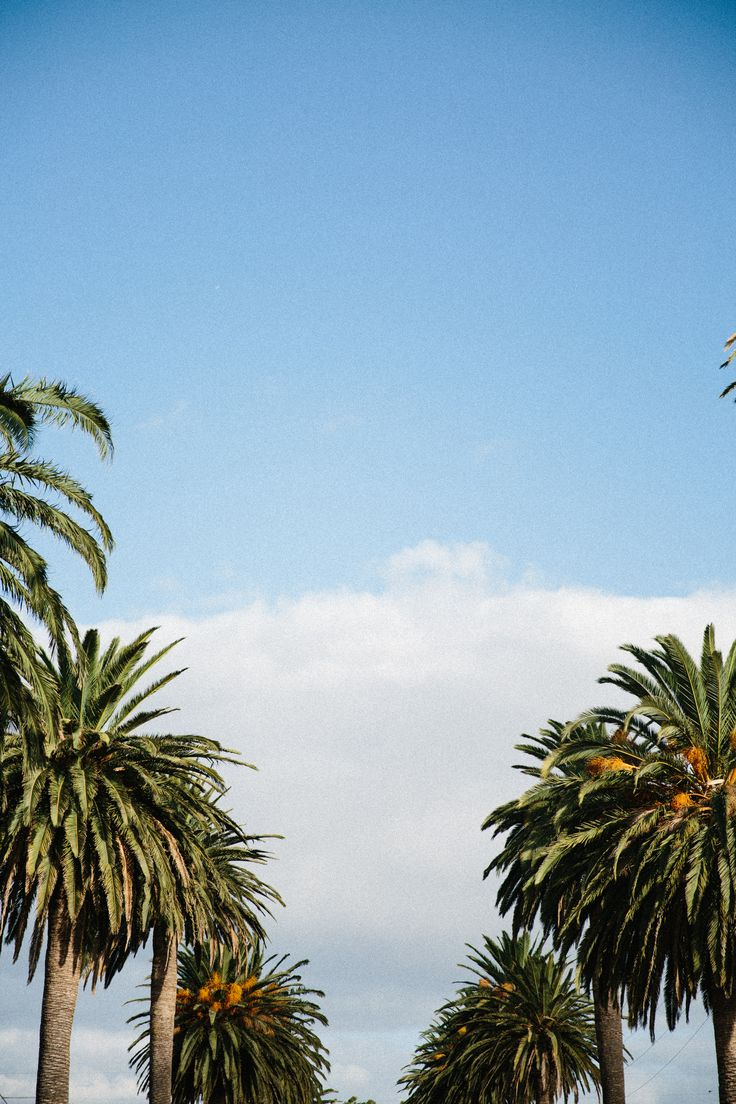 Palm, no springs. #canon #photo #street #adelaide #palmtrees #wallpaper #sky #nature #inspirational