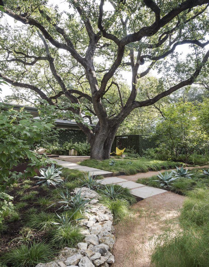 699 best images about garden landscape design on pinterest for Specimen trees