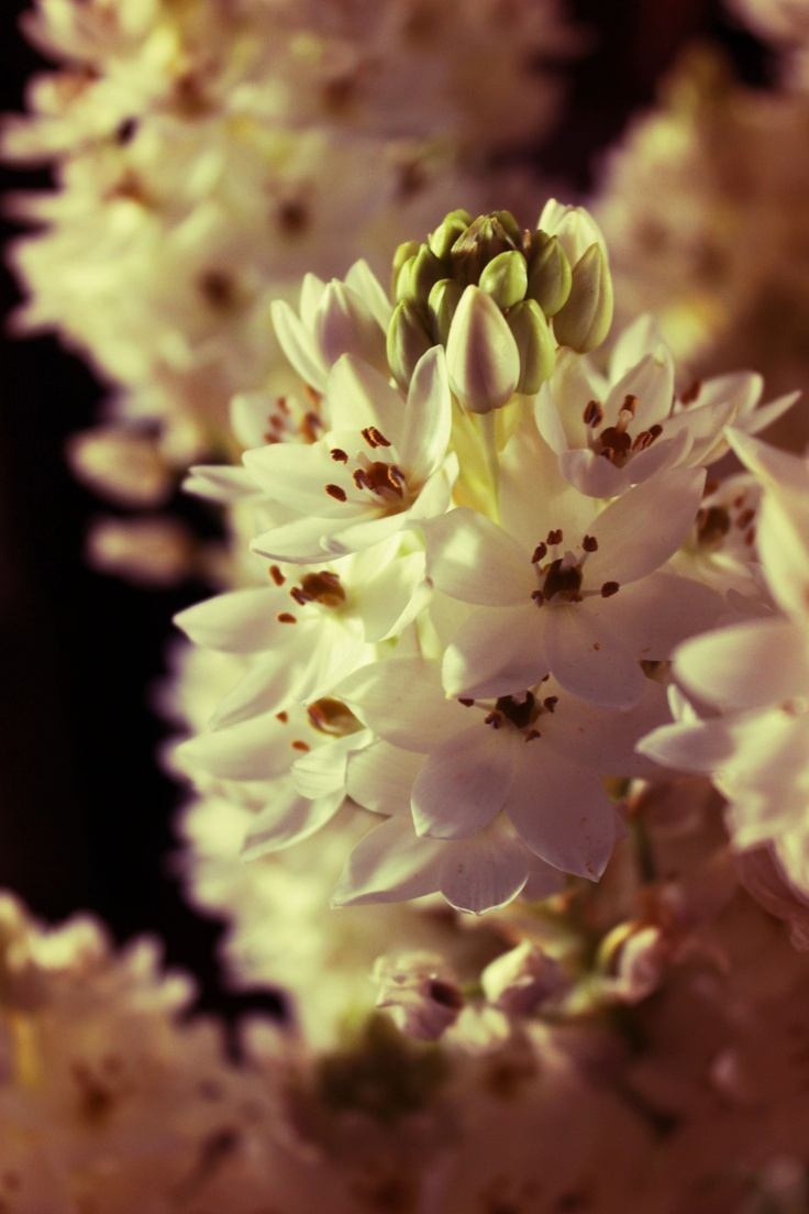 Delicate flowers bathed by the smooth light of the afternoon sun...  by ATeresaSantos