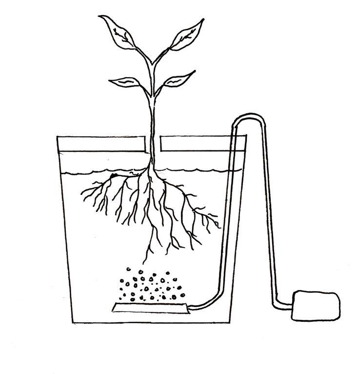Sistema hidropónico básico