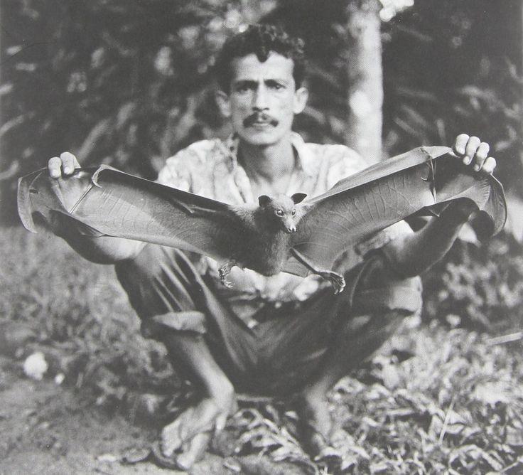 Norberto Lobo - Fornalha