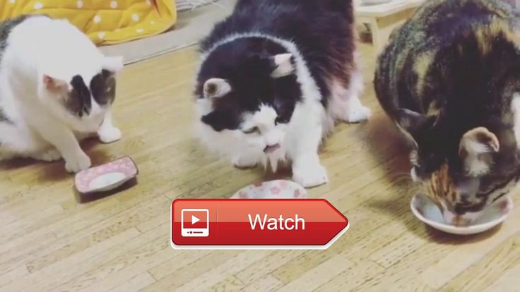 😸 Funny Cat Compilations Funny Cat Videos Most Funniest Video HD 😼 Funny Cat Compilations Funny Cat Videos Most Funniest Video HD Funny Cat…