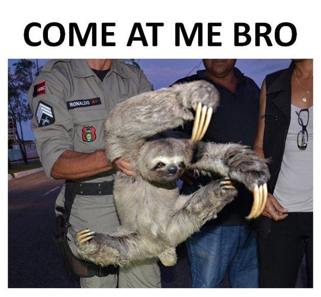 """Ninja Sloth: Come at me bro! - Funny sloth looks like ninja doing """"Come at me bro"""" pose."""