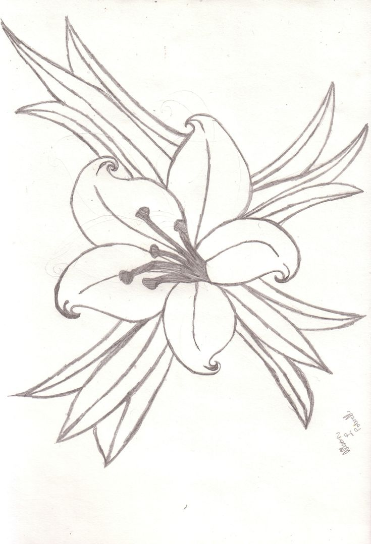 Lily Tattoo Line Drawing : Best images about flower on pinterest drawing