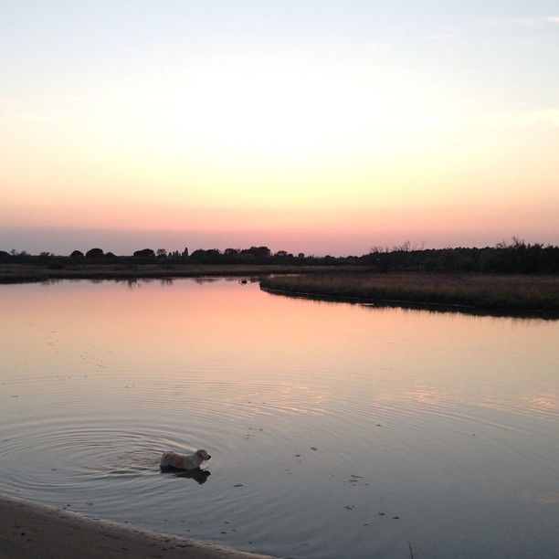 SnapWidget | Tramonto alla foce #tramonto #focedelbevano #lidodiclasse #igersfc #igersdog #ilovemydog #goldenretriever #golden