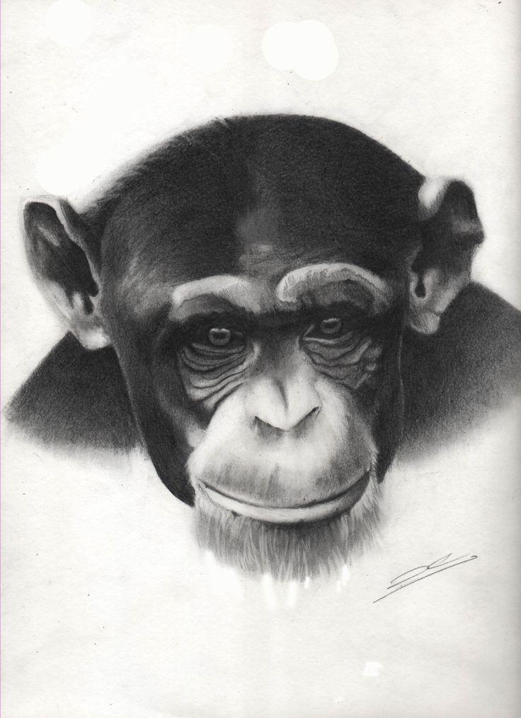 Chimpancé, mono, dibujo