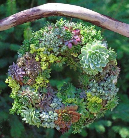 Coloridas e arrumadas em formato de guirlanda, estas plantas foram penduradas de um tronco.